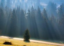 Morgonljus och dimma i granskogen med vägen arkivfoton