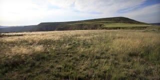 Morgonljus på ett fält Arkivfoto