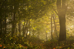 Morgonljus på slingan av skogen Royaltyfria Foton