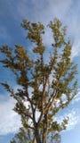 Morgonljus på träd Royaltyfri Bild