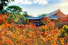 Morgonljuset av hösten på den Tofukuji templet, Kyoto Arkivbild
