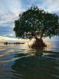 Morgonlugn på sjön royaltyfri bild