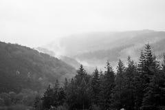 Morgonmist över skogsmark Arkivbilder