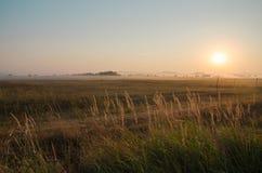 Morgonmist, gryning över vetefältet Royaltyfri Fotografi