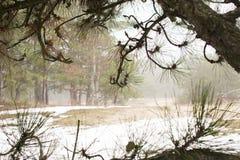 Morgonmist i skogen arkivbilder