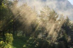 Morgonmist i skogen, solstrålar som bryter till och med dimman, Georgia, Tusheti fotografering för bildbyråer