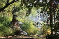 Morgonmist i skogsmark Arkivbilder