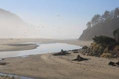 Morgonmist på stranden arkivbild