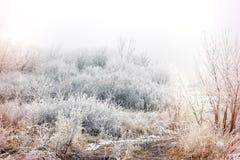 Morgonmistdimma och rimfrost - hoar på trädet och busken, vinterlandskap royaltyfri bild