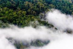 Morgonmisträkningen sörjer trädskogen, Thailand Arkivbild
