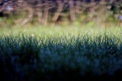 Morgonnedgång i gräsmatta på solljus Arkivbild