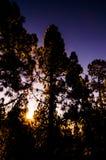 Morgonplats i skogen Arkivfoton