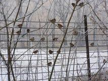 Morgonrimfrost Arkivfoto