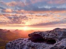 Morgonsikt över sandstenklippan in i den dimmiga dalen Sandstenmaxima ökande från det dimmiga molnet Royaltyfria Bilder