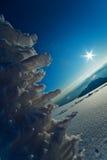 morgonsikt Fotografering för Bildbyråer