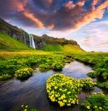 Morgonsikt av den Seljalandfoss vattenfallet på den Seljalandsa floden in royaltyfria bilder
