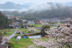 Morgonsikt av en lantlig stad med körsbärsröda träd Royaltyfria Foton