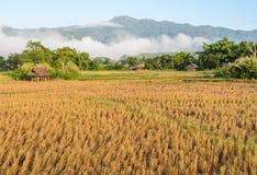 Morgonsikt av risfältet med dimma över Arkivbild