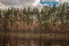 Morgonsolen börjar att exponera träden i skogen Royaltyfri Fotografi
