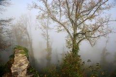 Morgonsolen klipper igenom mist i skogen, strålar av ljus arkivbild