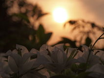 Morgonsolljus Arkivbild