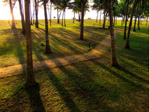 Morgonsolljus med skuggor från träd Arkivbild