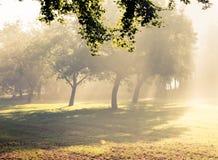 Morgonsolljusnedgångar. Arkivbild
