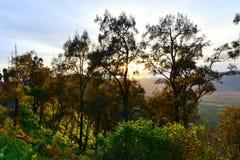 Morgonsolpiercing till och med skogen i East Java Royaltyfri Foto