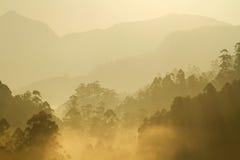 Morgonsolsken över den dimmiga skogen Arkivbilder