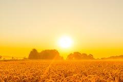 Morgonsolsken över ett vetefält royaltyfria bilder
