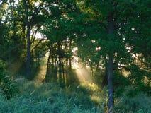 Morgonsolstrålar Royaltyfria Foton