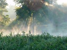 Morgonsolstrålar Arkivbild