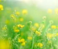 Morgonsolstrålar på små gula blommor Royaltyfria Foton