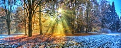 Morgonsolstrålar i vinterskog Arkivfoton