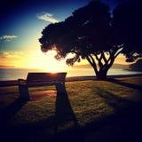Morgonsoluppgång över den Kohimarama stranden Fotografering för Bildbyråer