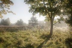 morgonsoluppgång Arkivfoton