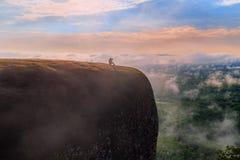 Morgonsoluppgång och dimmigt av trädet vaggar Fotografering för Bildbyråer