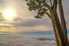 Morgonsoluppgång på berget med havet av dimma- och trädbakgrund Arkivbild
