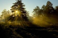 morgonstrålar Royaltyfri Bild