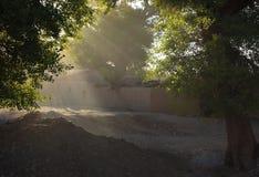 morgonstrålsolljus Arkivfoto