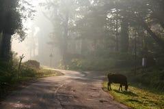 morgonstrålar Royaltyfri Foto