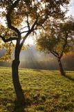 Morgonsun i treesna fotografering för bildbyråer