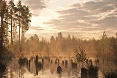morgonswamp Royaltyfri Foto