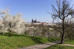 MorgonvårPrague stad med den gotiska slotten och de gröna natur- och blomningträden, Tjeckien Arkivfoto
