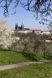 MorgonvårPrague stad med den gotiska slotten och de gröna natur- och blomningträden, Tjeckien Arkivbild