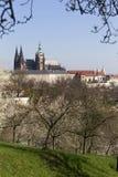 MorgonvårPrague stad med den gotiska slotten och de gröna natur- och blomningträden, Tjeckien Royaltyfria Bilder