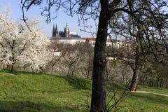 MorgonvårPrague stad med den gotiska slotten och de gröna natur- och blomningträden, Tjeckien Arkivfoton
