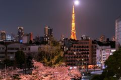Roppongi, Tokyo, Japan - March 26, 2018: Night view of cherry blossoming with Tokyo tower as background. Photoed at Mori Garden, T royalty free stock photography