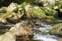 Morigerati oaza Zdjęcie Royalty Free