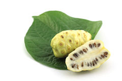 Morinda citrifolia or noni Stock Photos